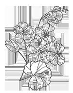 Echinacea-(2).png